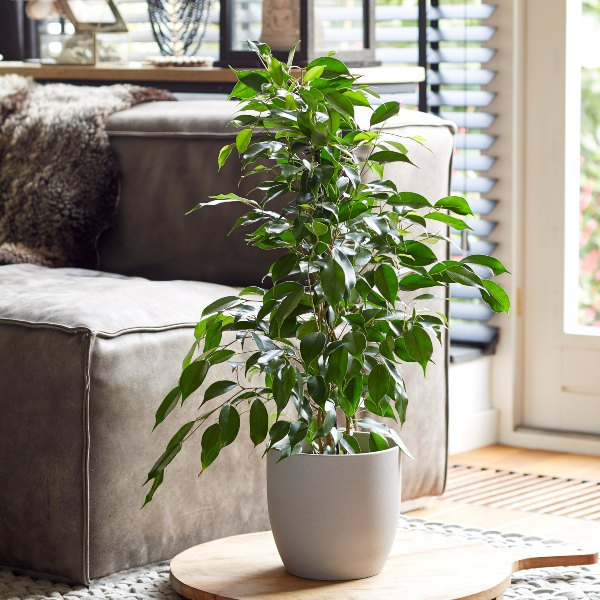 Top 5 indoor plants that will last the test of time